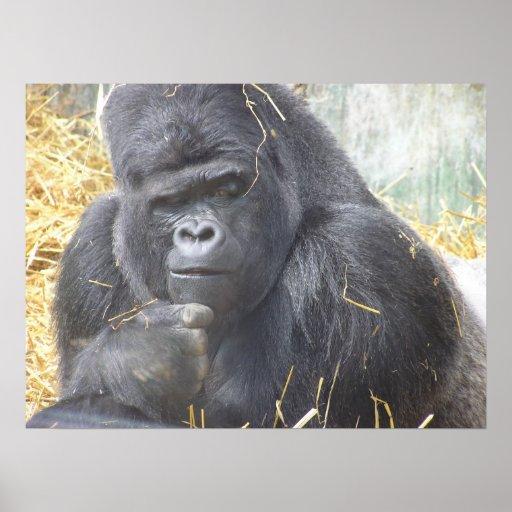 Poster pensativo del gorila