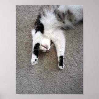 Poster perezoso de la pared del gato