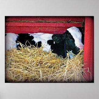 Poster perezoso de la vaca