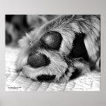 Poster polar del perro del golden retriever de las