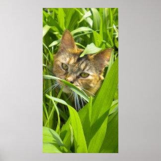 Poster precioso del gatito de la selva