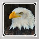Poster principal de Eagle