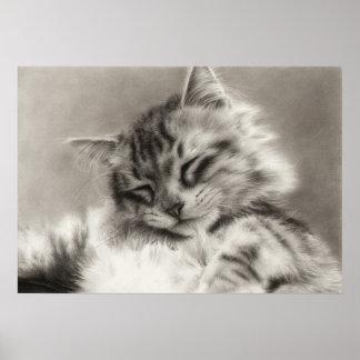 Poster principal del gato de Coon del Sleepyhead Póster