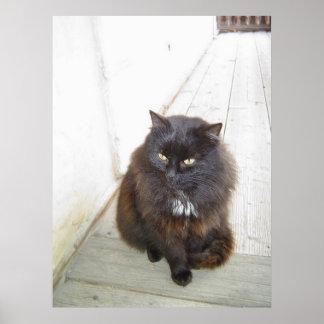 poster print black fat cat