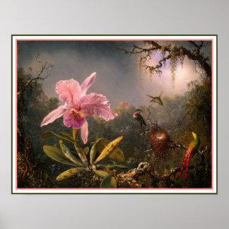 Poster/Print: Cattleya Orchid & Three Hummingbirds Poster