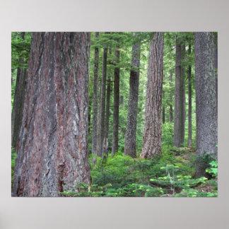 Poster profundo del bosque