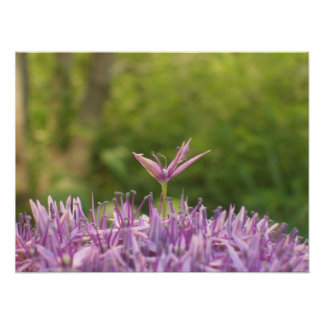 Poster:  Purple
