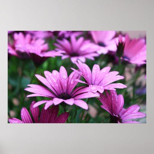 Poster púrpura brillante de la flor