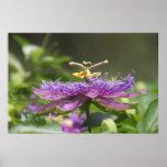 Poster púrpura de la naturaleza de la flor de la p