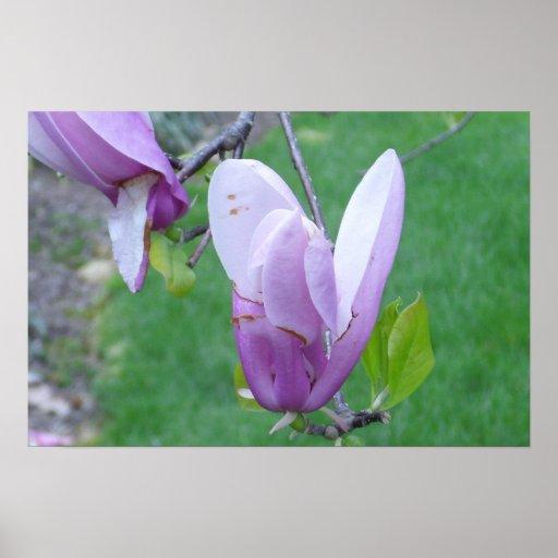 Poster púrpura del brote del árbol de tulipán de l