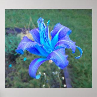 Poster púrpura del Daylily de la turquesa de N