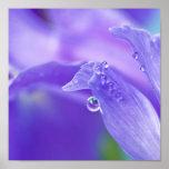 Poster púrpura del descenso del agua del iris