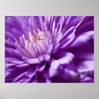 Poster púrpura del extracto de la flor