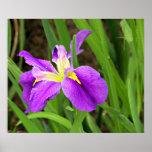 Poster púrpura del iris