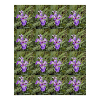 Poster púrpura del iris 2