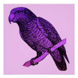 Poster púrpura del loro póster