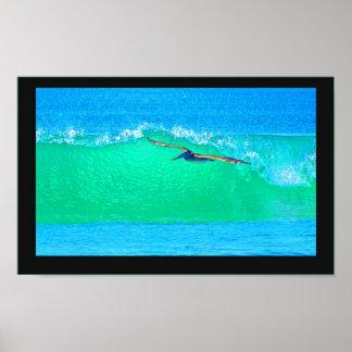 Poster que practica surf del pelícano