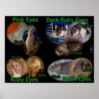 Poster: Rat Eye Colors Poster