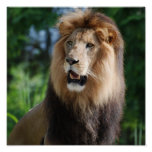 Poster real del león