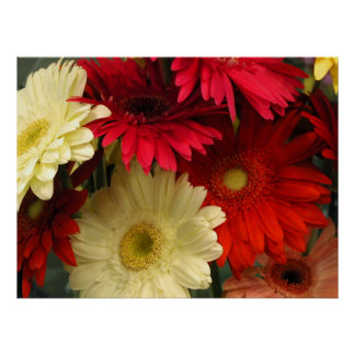 Poster, Red and White African Daisies Poster