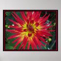 Poster - Red Dalia Flower