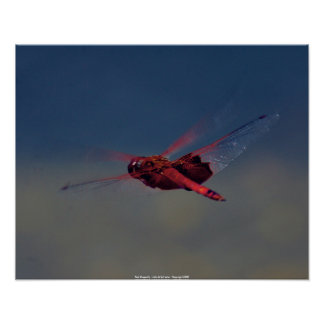 Poster Red Dragonfly - John A Sylvester - Co...