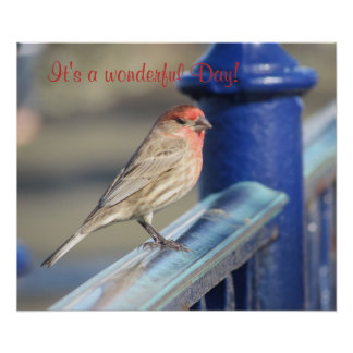 Poster - Red headed sparrow on fence