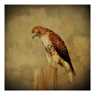 Poster-Red Tailed Hawk Poster