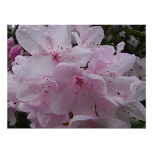 Poster Rhododendrons print