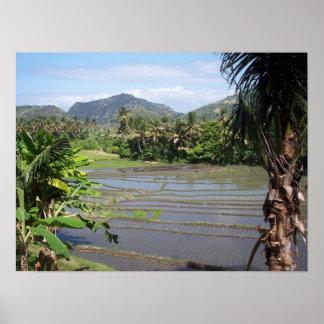 POSTER - Rice Paddies in Bali