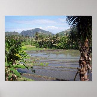 POSTER - Rice Paddies in Bali print