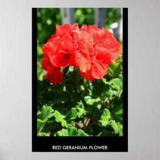 Poster rojo de la flor del geranio, impresión