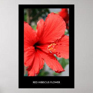 Poster rojo de la flor del hibisco, impresión
