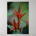 Poster rojo de la planta