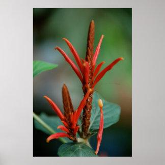 Poster rojo de la planta póster