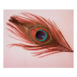 Poster rojo de la pluma del pavo real
