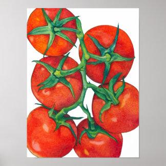 Poster rojo de los tomates póster