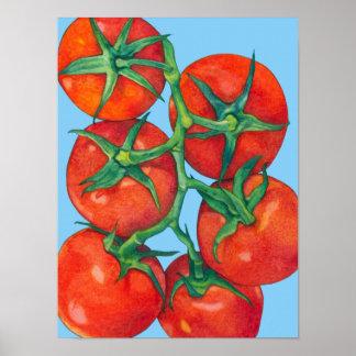 Poster rojo del azul de los tomates póster