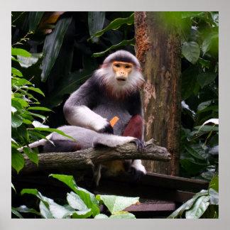 Poster rojo del mono del Langur de Shanked Douc