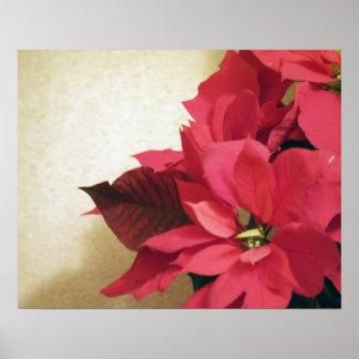 Poster rojo del Poinsettia