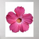 Poster rosado de la flor