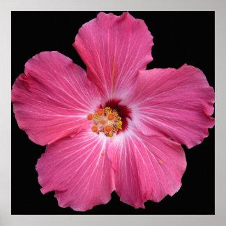 Poster rosado de la flor 24 x 24