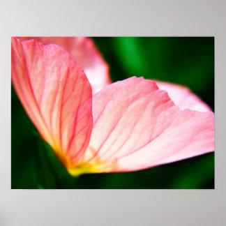 Poster rosado de la onagra