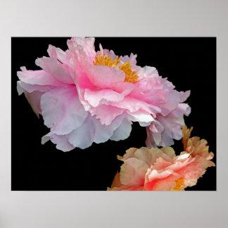 Poster rosado de los Peonies de Pas de Deux Lush