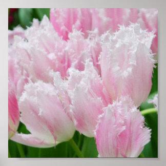 Poster rosado de los tulipanes del loro