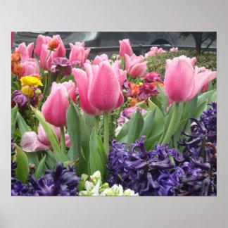 Poster rosado del bosque del tulipán póster
