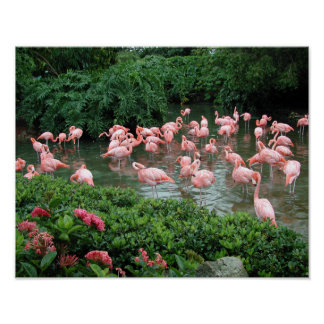 Poster rosado del flamenco