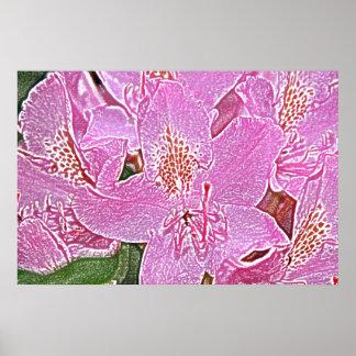 Poster rosado del flor del rododendro