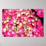 Poster rosado del ramo del Hydrangea, S Cyr