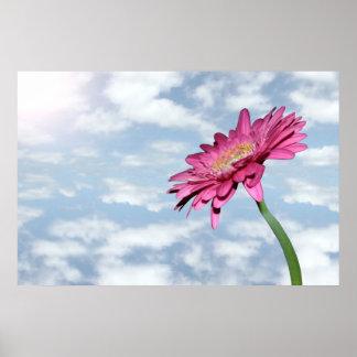 poster rosado nublado del crisantemo